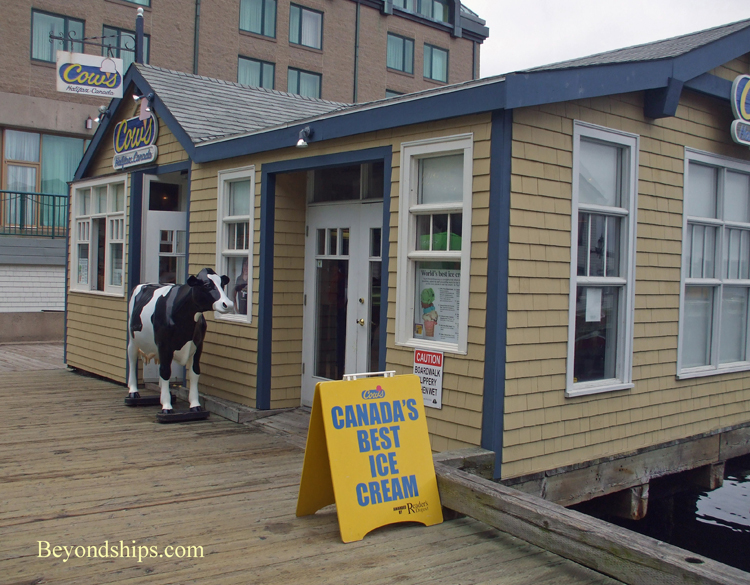 Cows, Halifax, Nova Scotia