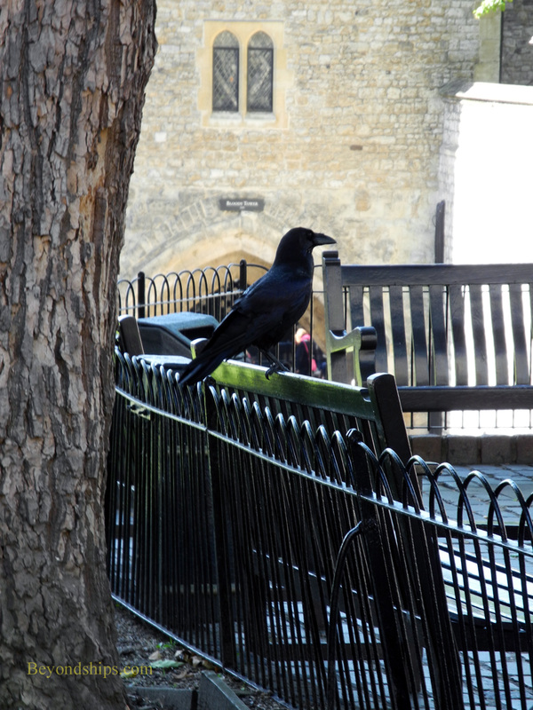 Picture Raven, Tower of London