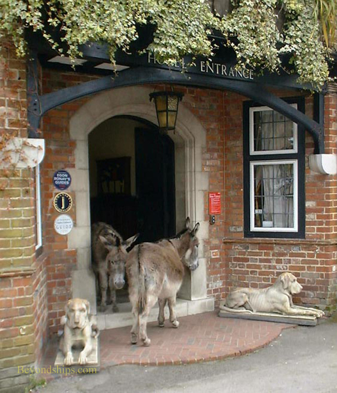 Picture New Forest England Beaulieu donkies