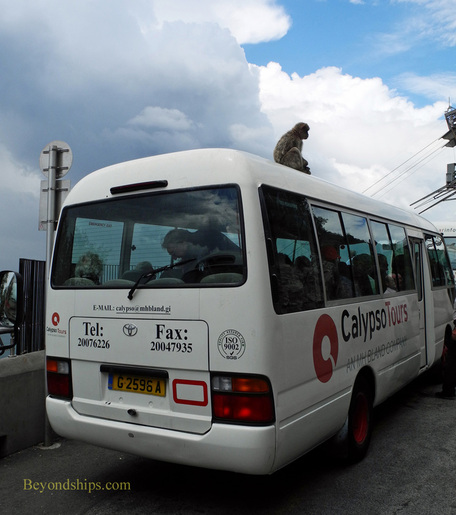 Barbary ape on bus Gibraltar
