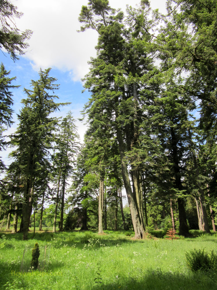 Pinetum at Glamis Castle, Scotland