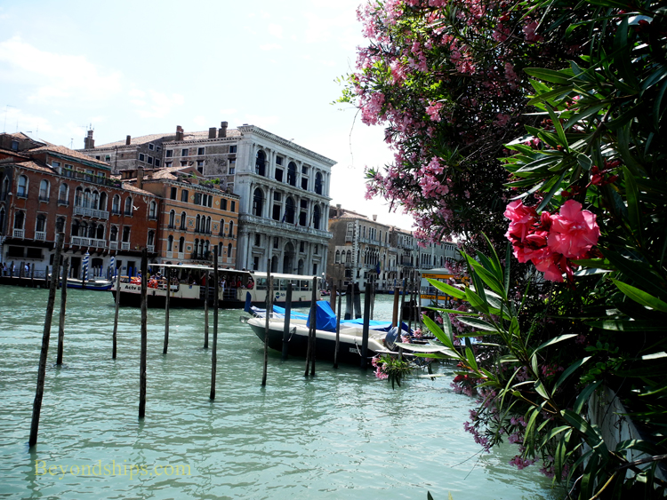 Picture cruise destination Venice Italy Grand Canal