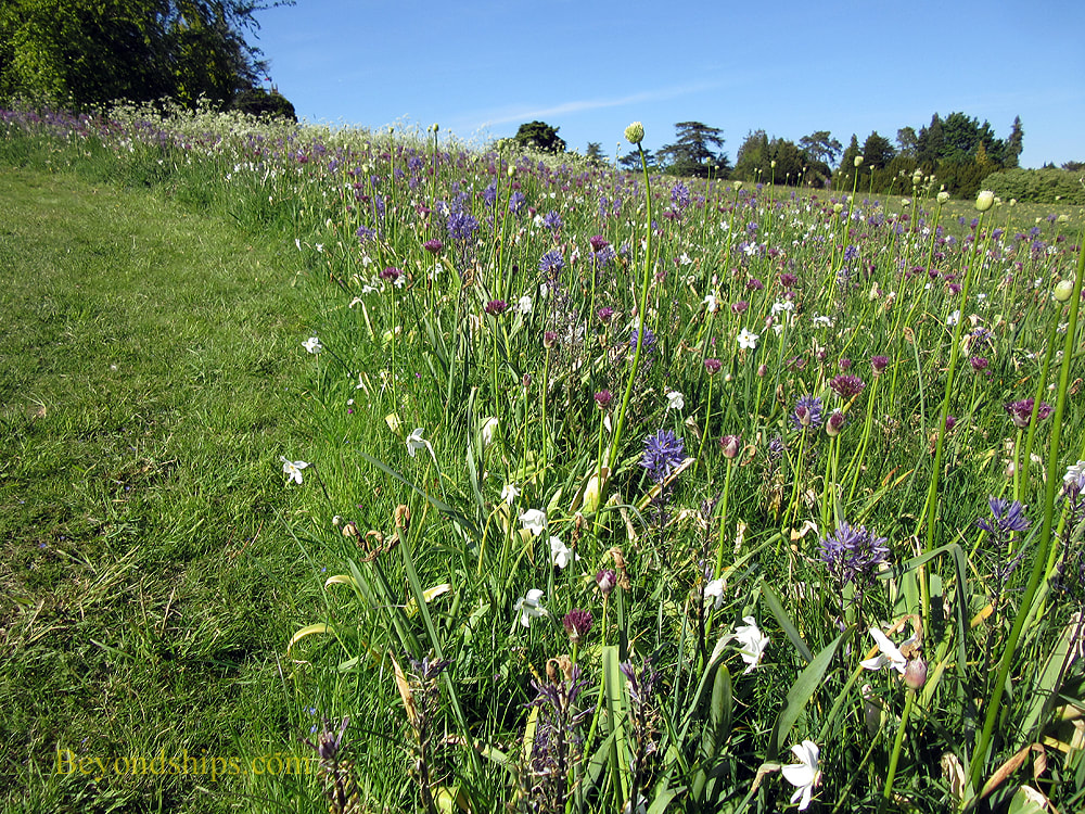 Wild flowers at Highclere Castle